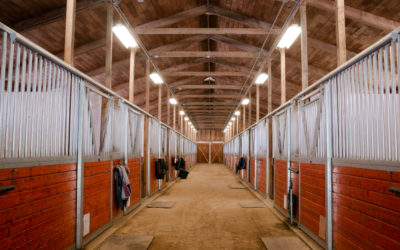 COVID -19 Coronavirus Pandemic Horse Owners Survey – What's Happening in Livery Yards?